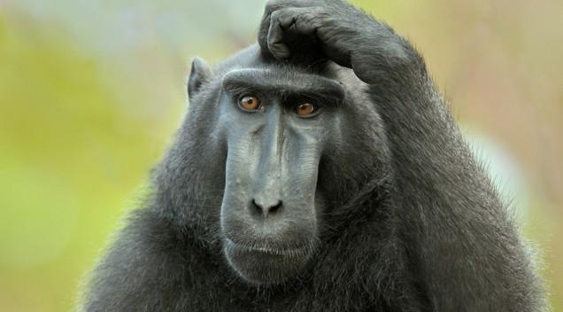 Чем отличается человек от животного? Сенсация! :)