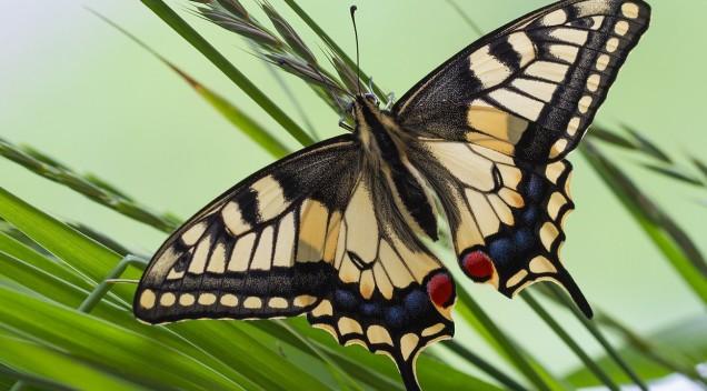 Эффект бабочки? А что тогда такое эффект человека? :)